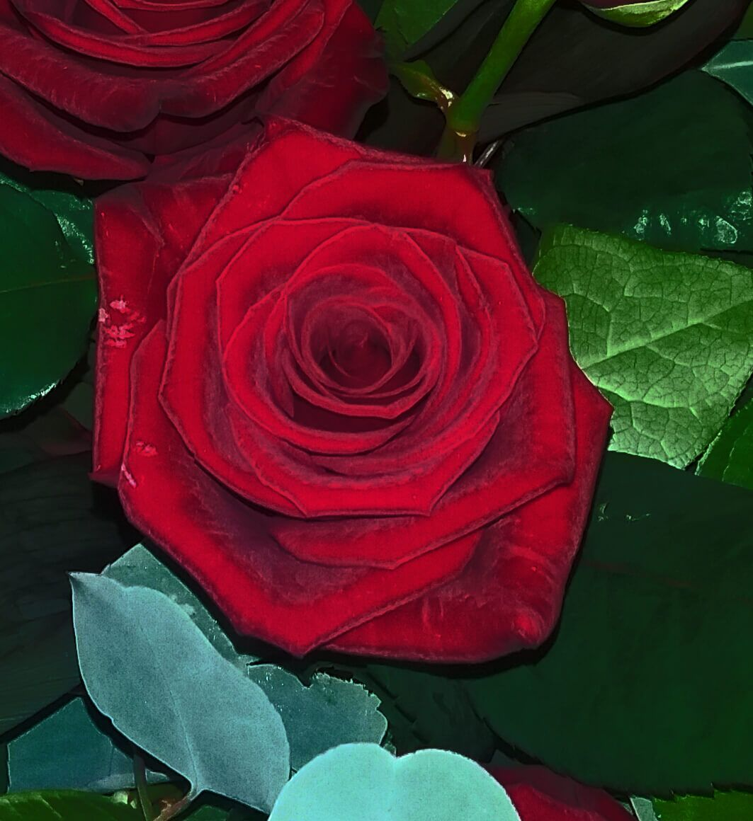 Funeral Flowers Red Rose F A Stockill And Son
