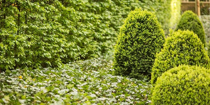 green garden free stock image