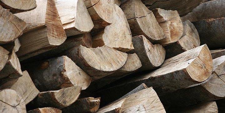 free stock image of tree trunks