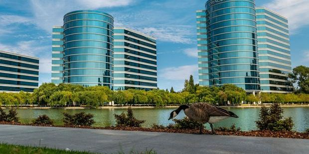 Oracle Reports Earnings Tomorrow. Here's What to Expect.
