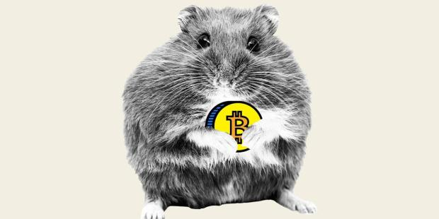Meet the day-trading hamster that is outperforming Warren Buffett, Cathie Wood, and the S&P 500