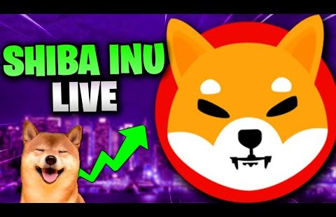 SHIBA INU COIN – BLOWING UP RIGHT NOW! 🚀🌕 HUGE SHIBA INU COIN NEWS TODAY! 🔴LIVE