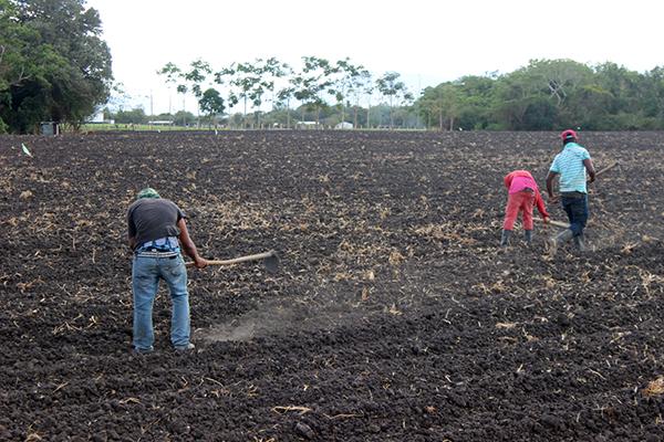Yayabo Workers