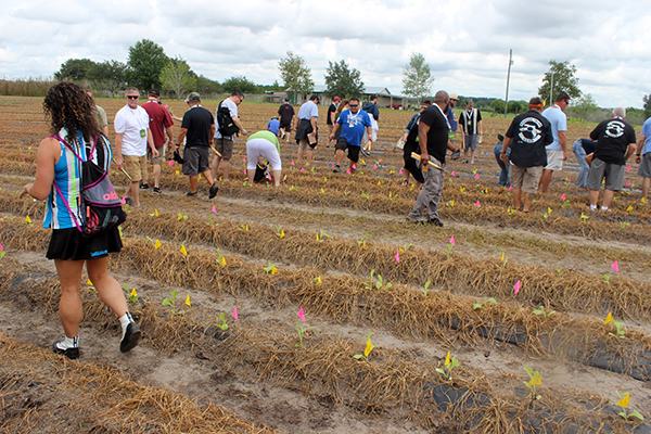 Florida Sun Grown Farm