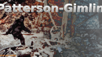 Photo of Sdfiles #37 – Patterson-gimlin