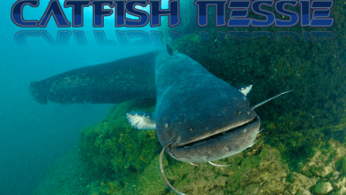 Photo of Sdfiles #51 – Catfish Nessie