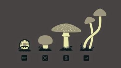 Photo of Know Your Mushroom – #238