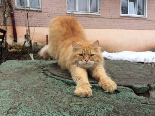 Под Краснодаром прохожие спасли кота, застрявшего в окне ...
