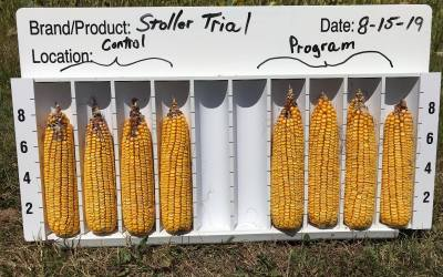 Stoller's Program to Increase Corn Kernel Weight