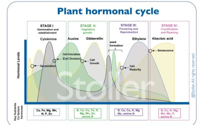 Maximize the Genetic Potential of Plants