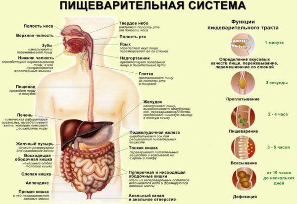 îndepărtați grăsimea în jurul pancreasului)