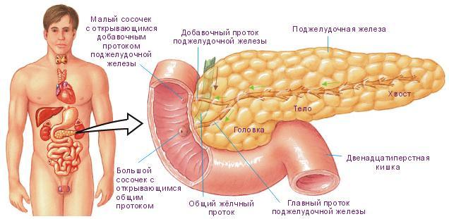 cum să îndepărtați grăsimea în jurul pancreasului