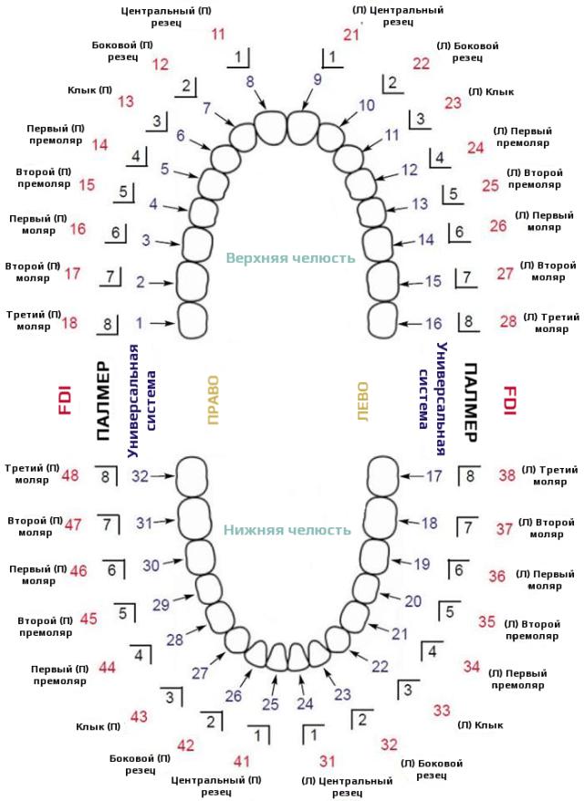 Системы нумерации зубов