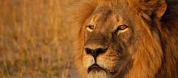 Cecil lav