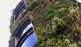 5_Moss-growing-concrete-CO2