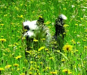 jambo in flowers2