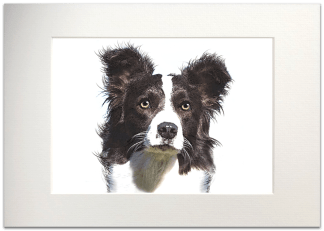 Border Collie Signed A4 Mounted Print