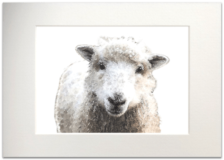Sheep Signed A4 Mounted Print