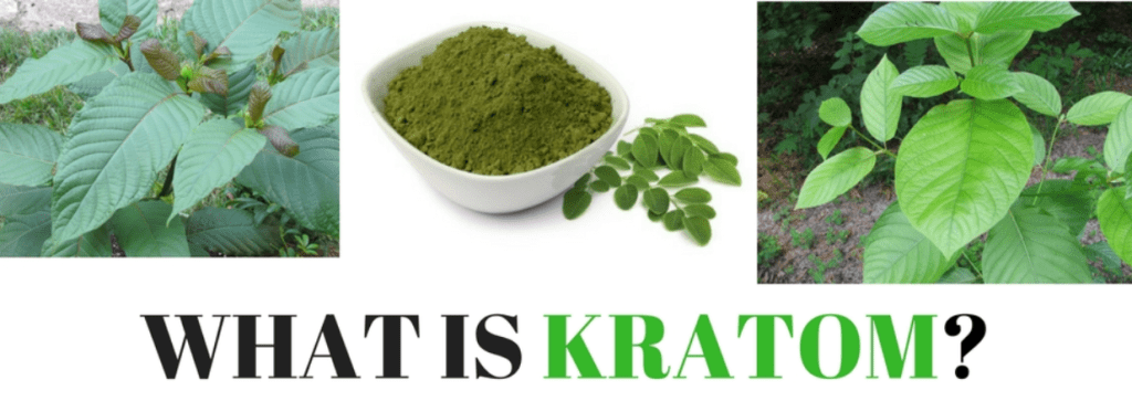 What is Kratom? – Friendly Guide to this Medicinal Plant
