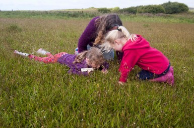 A sunny Sunday morning in June spotting wild flowers and bugs in the flower meadows at Stones Cottages