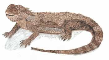 Pain brown lizard