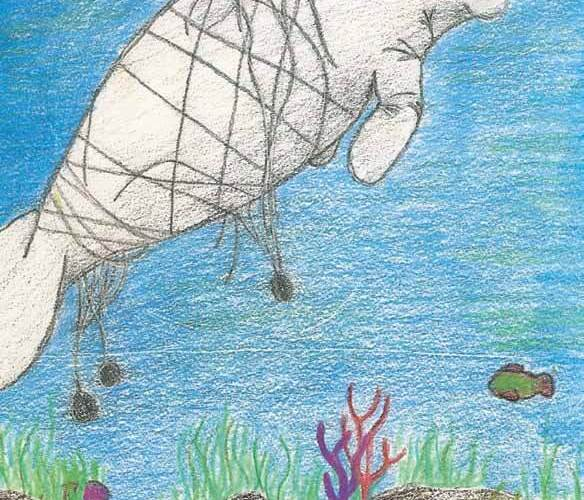 The Chesapeake Bay Manatee caught in the net