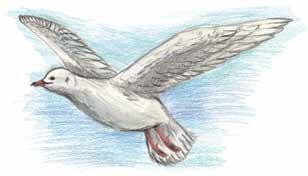 Maddy's Last Beach Visit white bird