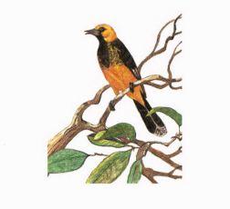 The Fallen Log yellow bird