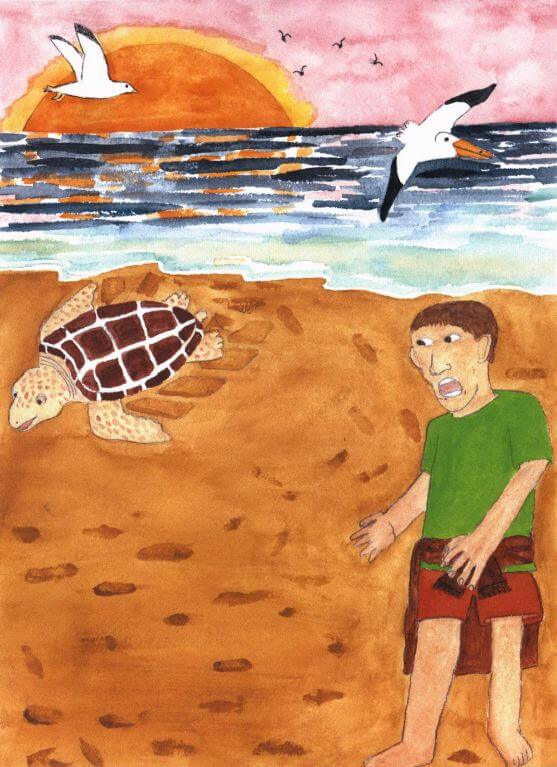 Summer of the Sea Turtles watching a turtle