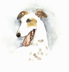 Greyhound Park white greyhound