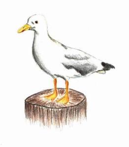 a scrap of orange cloth seagull