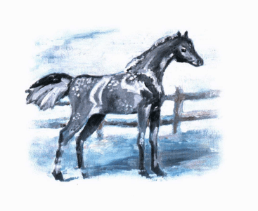 Baby a horse