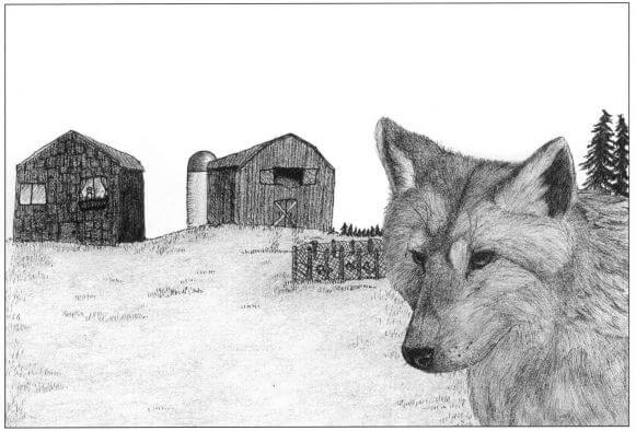 Enchantment of the Wolves a wolf in the yard