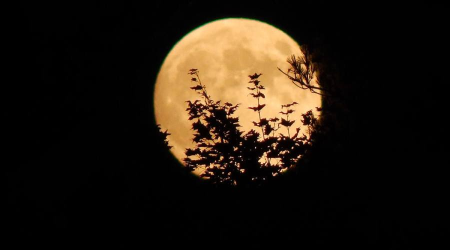 Halloween Moon