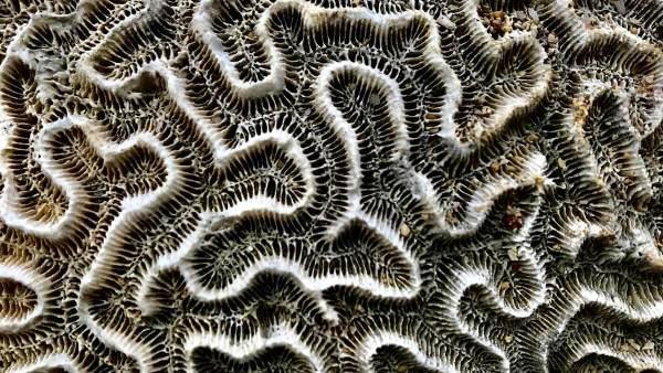 Coral Maze