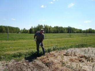 Craig putting mulch back on garlic