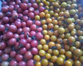 Cherry tomatoes galore