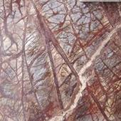 Forest-Brown-300x300