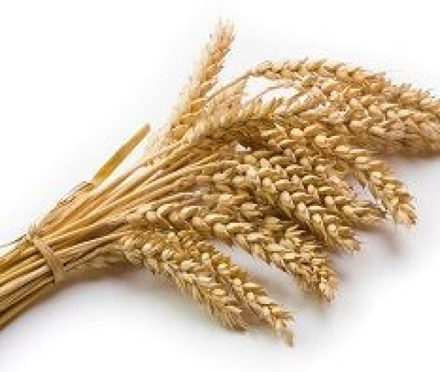 Wheat Allergy Treatment And Symptoms