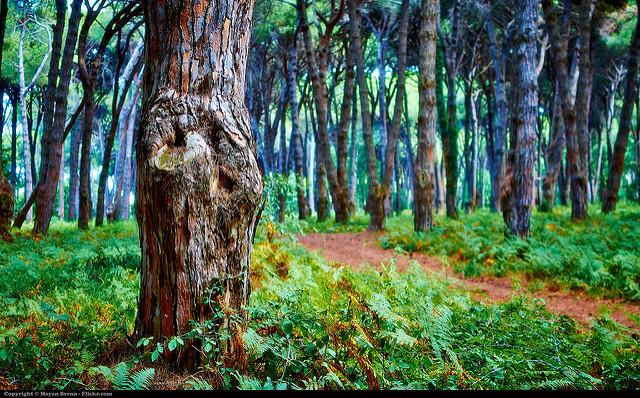 El papel-cartón sale de los árboles