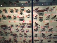 HUGE collections displaying the birds of Kenya.