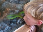 Torin meets the green mamba