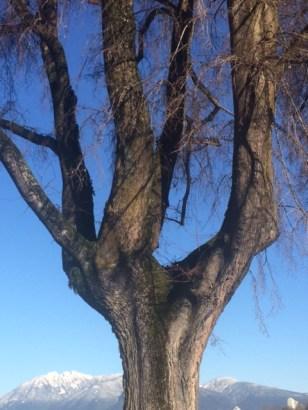 tree-6