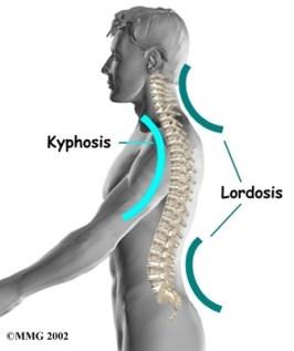 sagittal spine