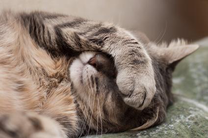 Sleep Chemistry & Pain