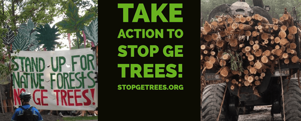 UPDATE: Take Action! Help End the Threat of Genetically Engineered Trees
