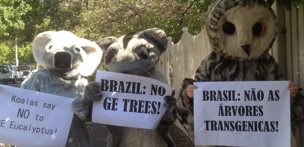 Report Backs from the Global Days of Action Against GE Trees