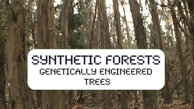 """Video Clips from """"Synthetic Forests"""" Documentary on GMO Trees"""