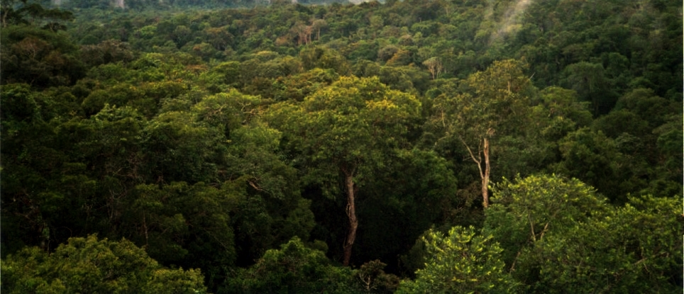 Report: Indigenous people key to storing carbon in tropical forests