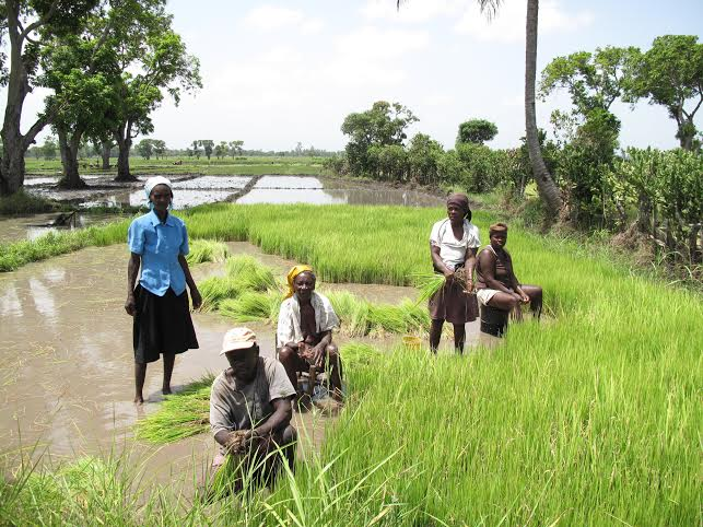 Women Farmers and Land Grabs in Haiti: An interview with Iderle Brénus